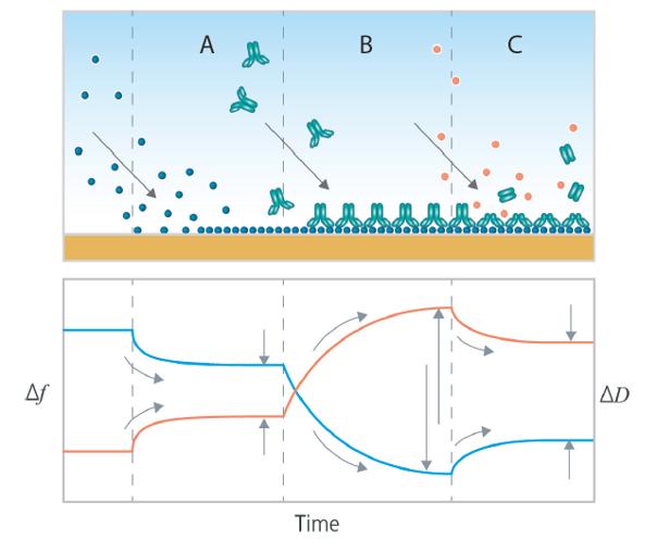 石英晶体微天平qcm揭示分子